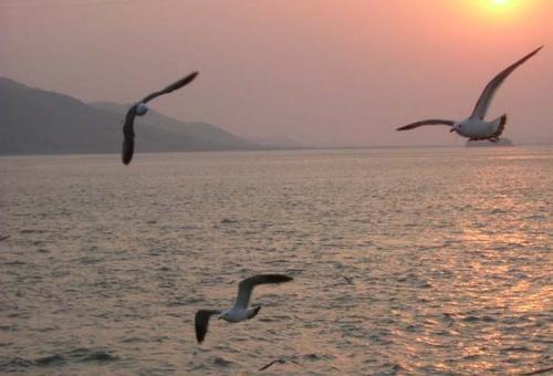 Sunset with Three Gulls
